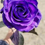 Tinted Purple