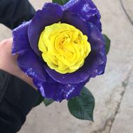 Essence Purple/Yellow