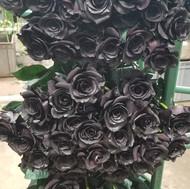 Tinted Black