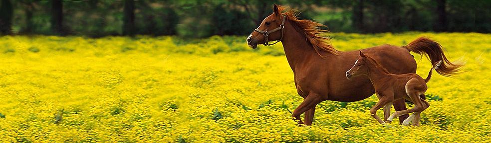 beautiful-pony-horse-header-1.jpg