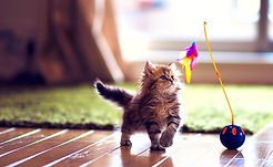 cute-kitten-playing-wallpaper-preview.jp