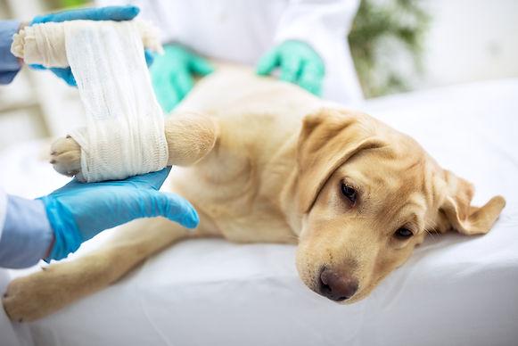pet-surgery.jpg