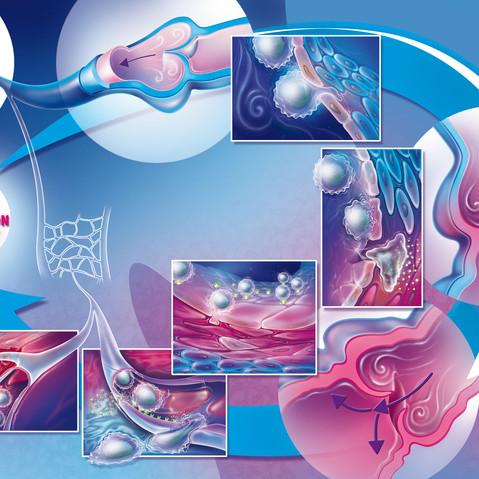 Pathologie Circulatoire