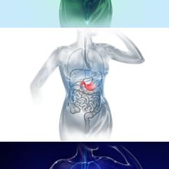Trajet probiotiques - Avant projet film 3D