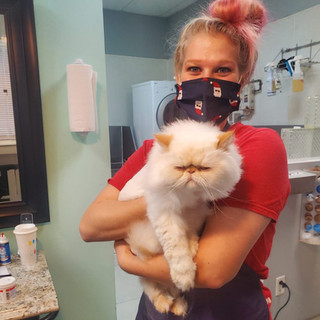 Cats grooming 1-A.jpeg