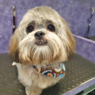 Dog groomed 16.jpg