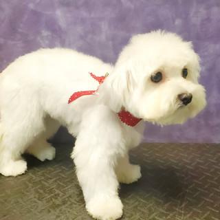 Dog groomed 25.jpg