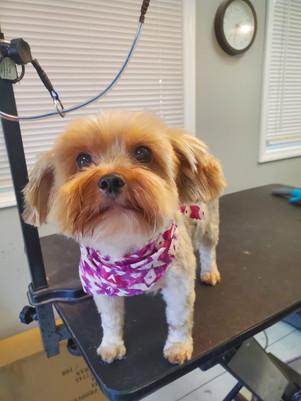 Dog groomed 19.jpg