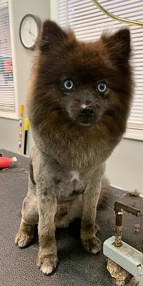 Dog groomed 3.JPG