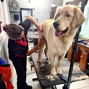 Dog grooming 3.JPG