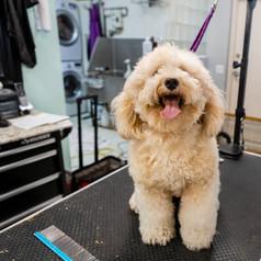 Dog grooming 2.jpg