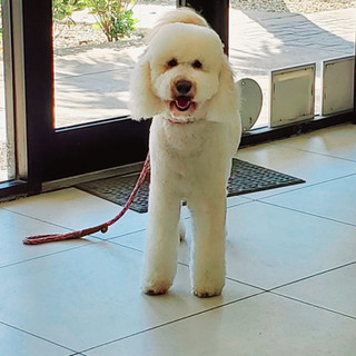 Dog groomed 27.jpg