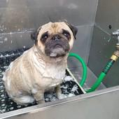 Dog bath 5.jpg