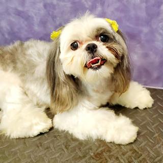 Dog groomed 28.jpg