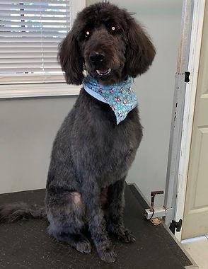 Dog groomed 10.jpg