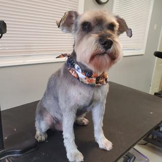 Dog groomed 20.jpg