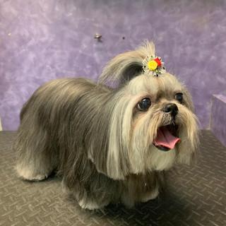 Dog groomed 30.jpg
