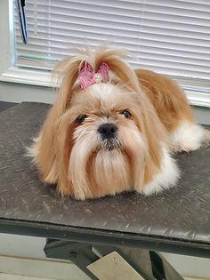 Dog groomed 2.JPG