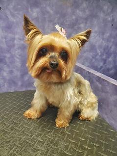 Dog groomed 17.jpg