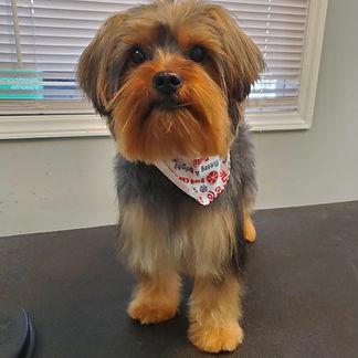 Dog groomed 9.JPG