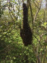 Apiculteur - Récupération - Ceuillage - Ruche essaim d'abeilles près de Guichen Bruz Plechatel Crevin Bain de Bretagne 35