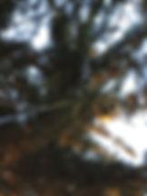 Traitement de nid de frelons asiatique très haut dans un arbre dans le 35 44 56