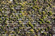 Démoussage manuel d'une toiture fortement touchée à Maure de Bretagne