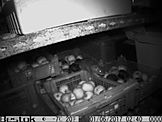 Deratiseur - Traitement anti Rats pres de Rennes