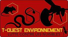 Traitement de nid de frelons et guepes - récupération d'essaim d'abeilles près de Guichen Rennes Bruz Pléchatel Bourg des comptes Bain de bretagne 35