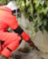 Destruction de nids de guepes brest landerneau carnac quiberon douarnenez concarneau