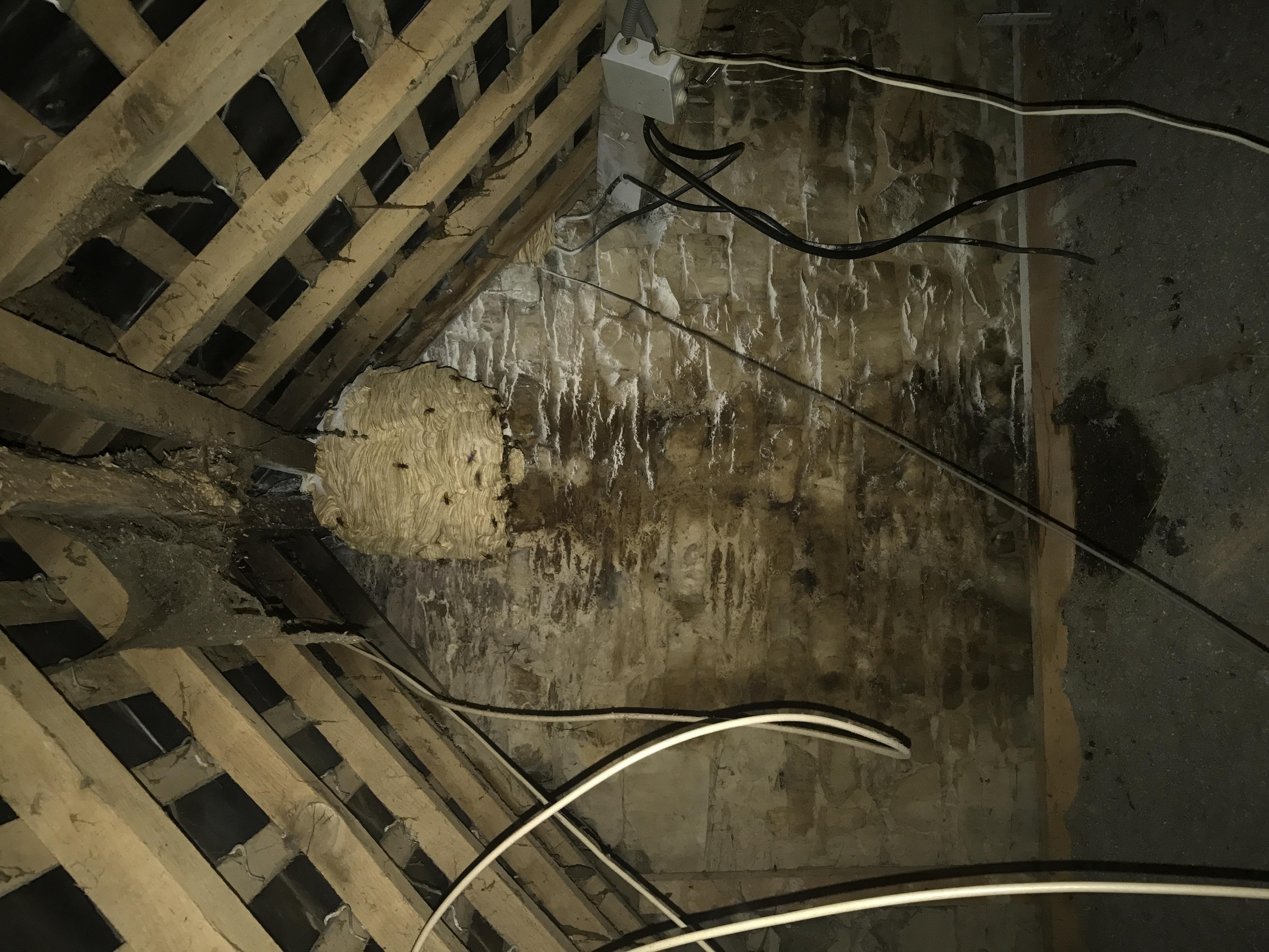 Destruction nid de frelons 35