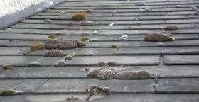 Nettoyage d'une toiture à Pipriac