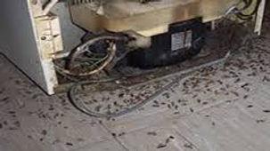 Desinsectisation 35 - Destruction - Elimination des cafards près de Rennes et ses alentours