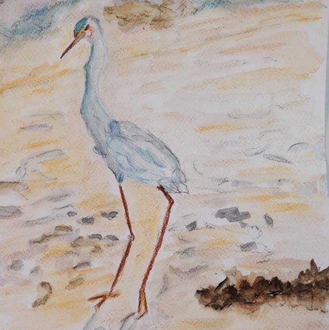 Bird at the Beach.JPG