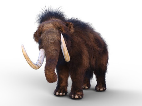 Why woolly mammoths make your tinnitus worse