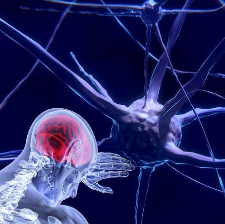 Anatomide Duraklar Arası: Sinir Sistemi