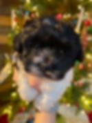 Screen Shot 2019-12-14 at 8.47.27 PM.png