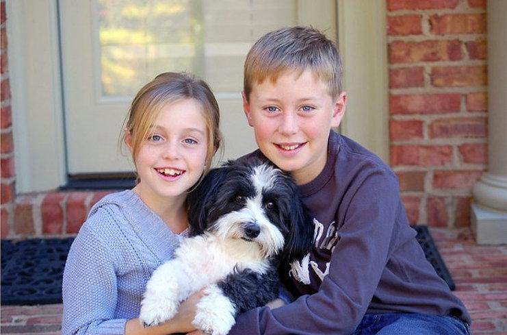 havanese coton de tulear dog puppy havaton kids