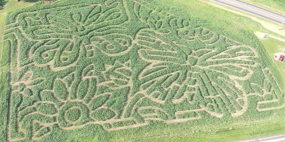 Fresh Acres Corn Maze 2020