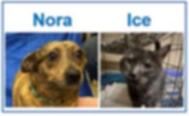 Nora and Ice.JPG