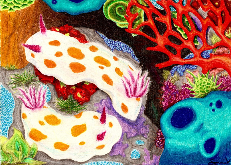 Nudibranc