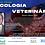 Thumbnail: Simpósio de Oncologia Veterinária