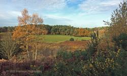 Brianseye Landscape (87)