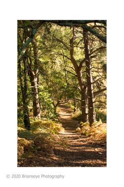 23. Hesworth Common-15- mystic path