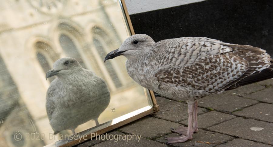 Vain Seagull 1