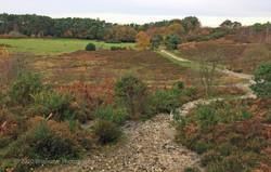 Brianseye Landscape (88)
