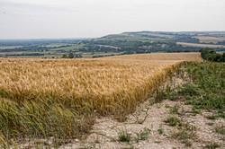 Brianseye Landscape (119)