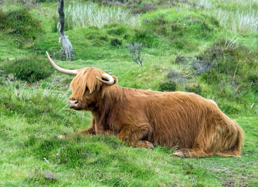 Dartmoor- 2019