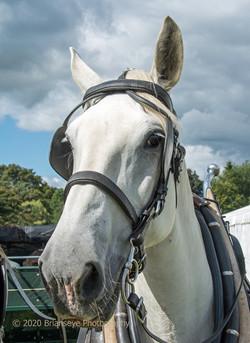 Smart draught horse