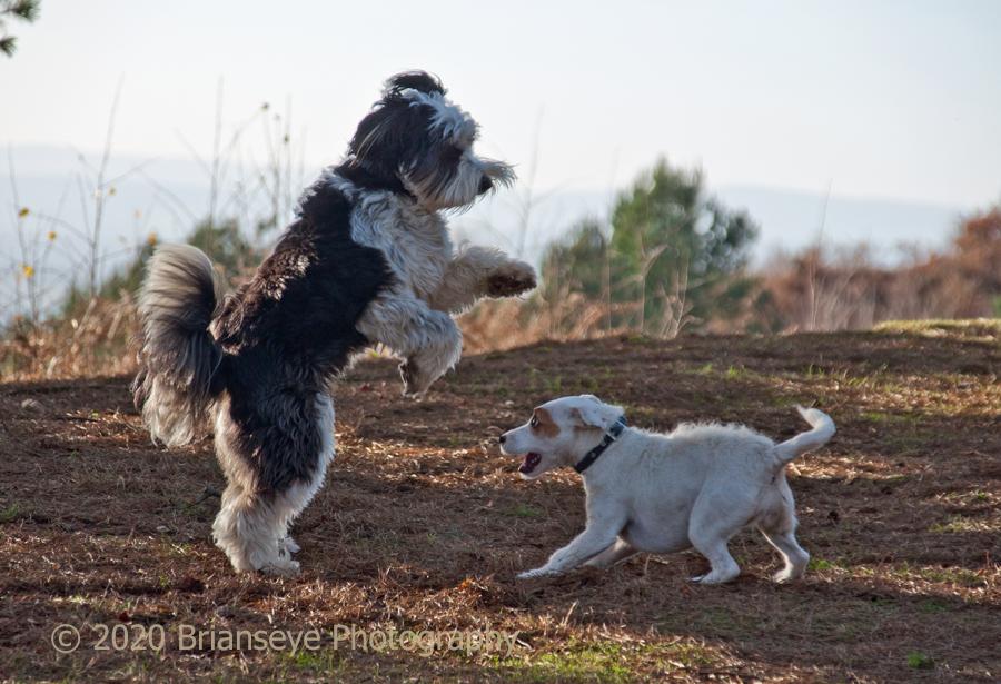 Max at play